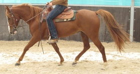 Foxtrotter in lengthened foxtrot. Note the near front hoof having just hit ground, while the off hind is just about to.