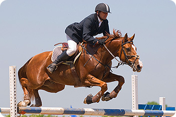 Horse_Jumping_Show_5230677